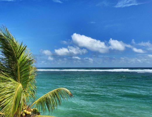 Polhena beach cocotier
