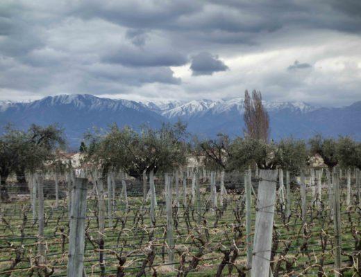 Mendoza - Bodega Alta Vista Vue