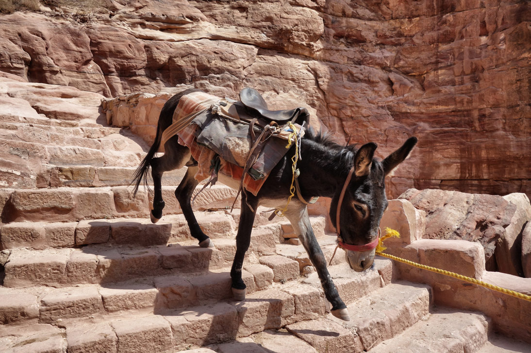 Petra ane monastere Jordanie
