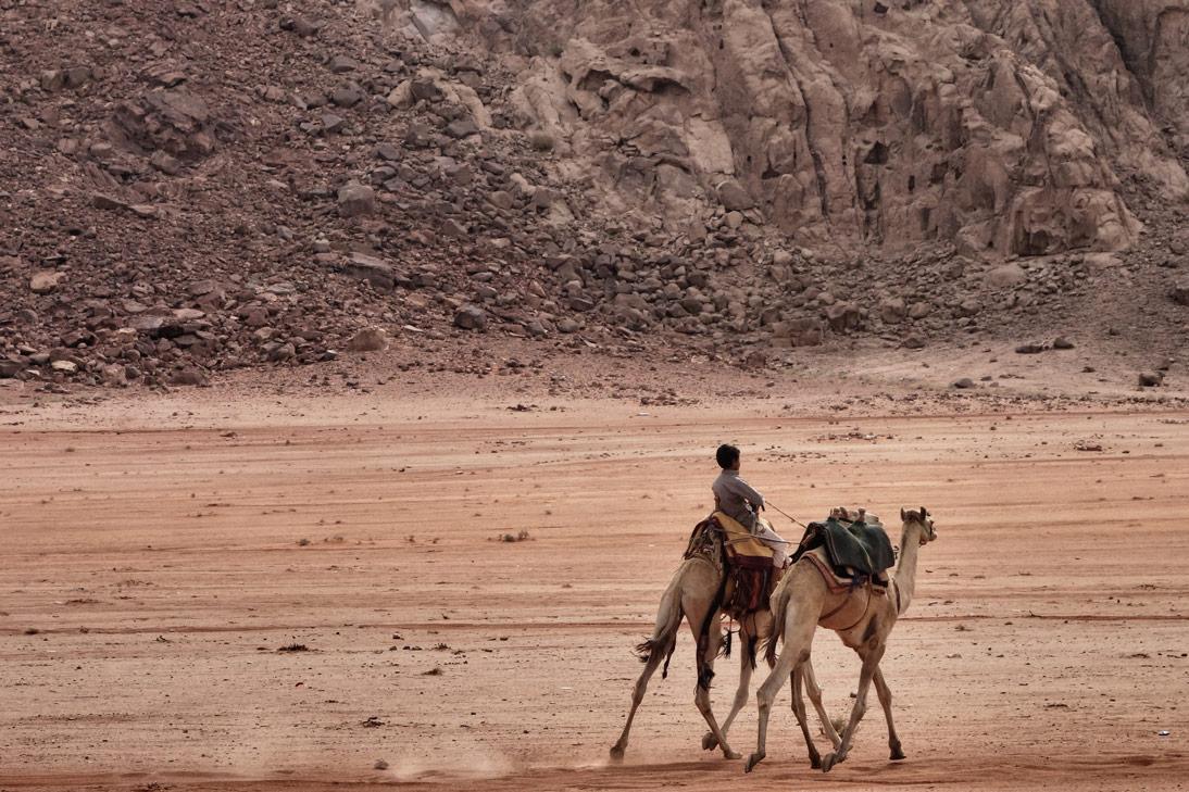 Wadi Rum Dromadaires enfant