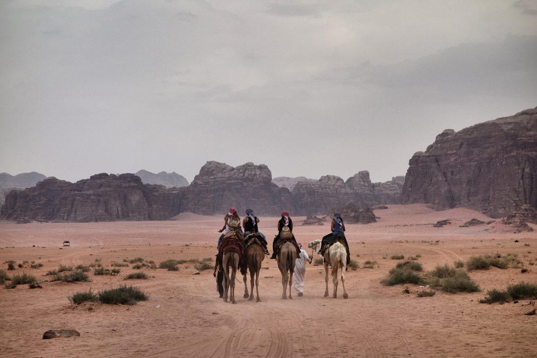 Wadi Rum Dromadaires