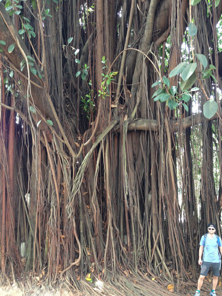 Sri Lanka Kandy Arbre