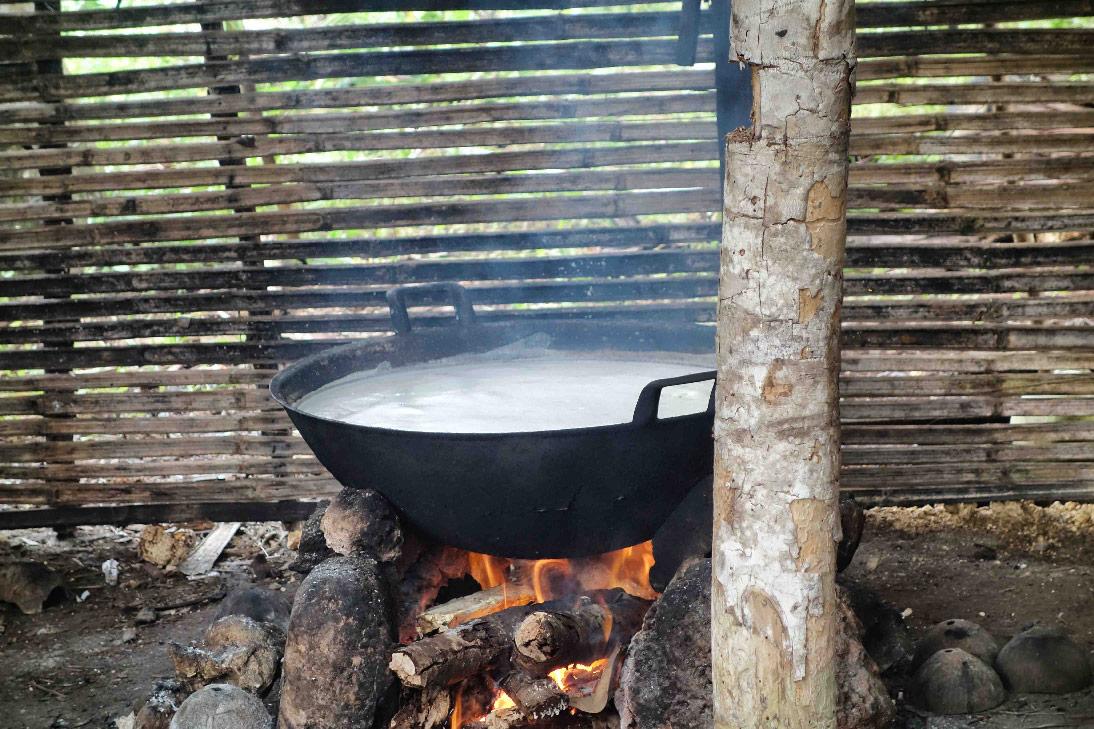 Sucre palme jungle bomba togian sulawesi