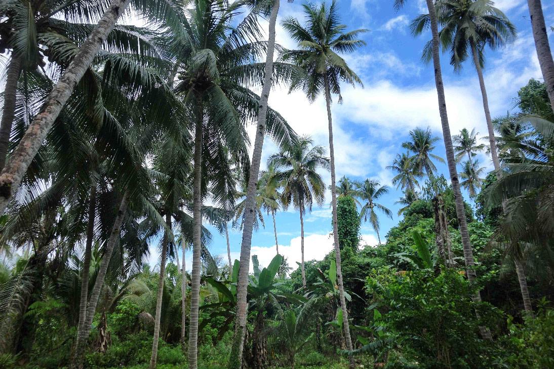 jungle bomba togian sulawesi